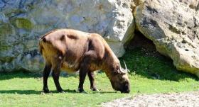 ZooParc Cannet des Maures