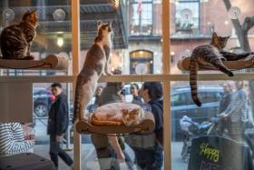 MeowCats Café