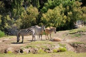 SIGEAN réserve africaine