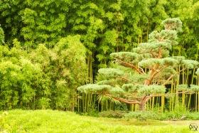 La Bambouseraie en Cévennes Gardoise