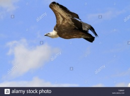 Les Aigle de la Sainte Baume - La Fauconnerie