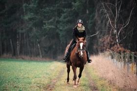 T.L.P Equitation