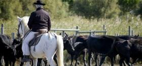 Association camarguaise de tourisme Equestre