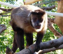 ZOA – Parc Animalier Botanique