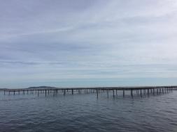 Balade en Bateau & Sortie Pêche