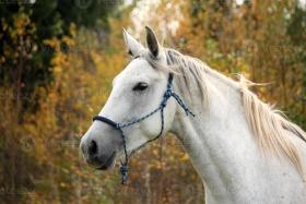A cheval à la Palunette